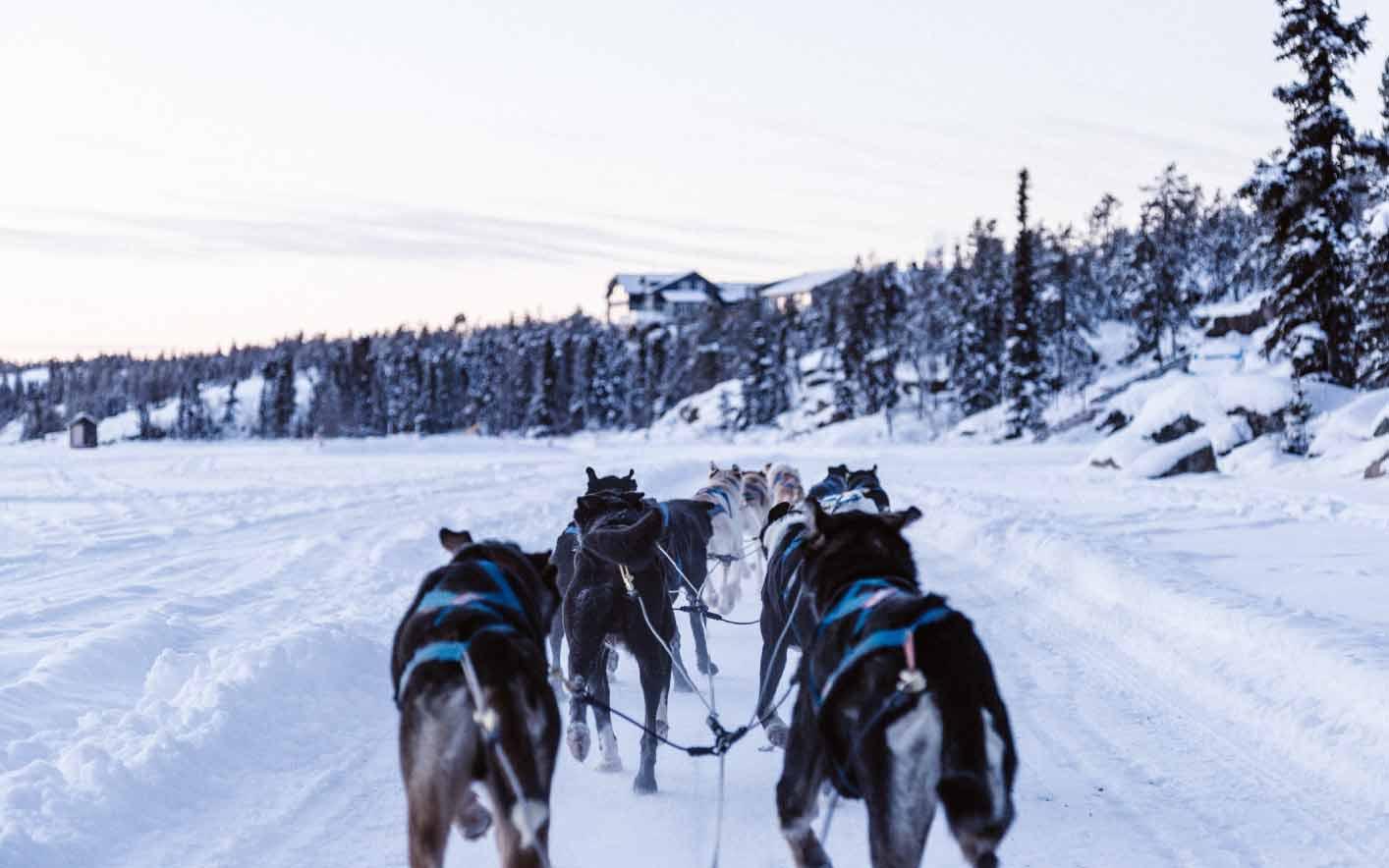 dogsledding activities in Yukon, Canada